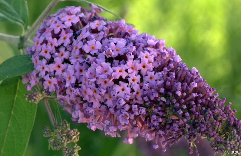 LILO Imagen & Foto plantas, Árboles, naturaleza Fotos de