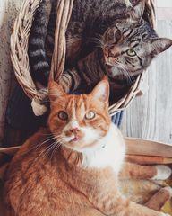Lilo&Pucci