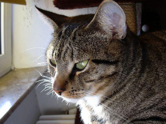 Lilu beobachtet