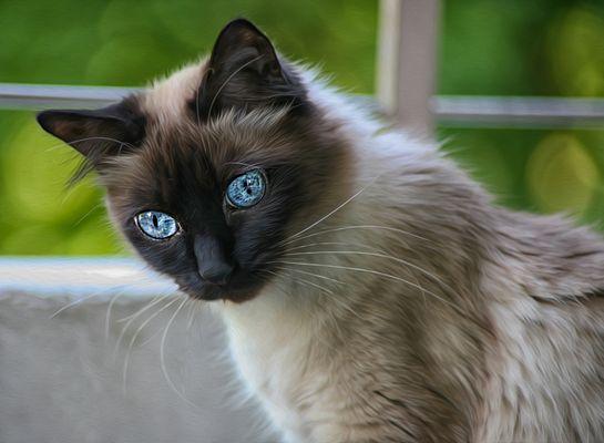 Lily Blue Eyes