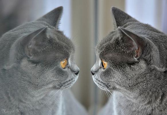 Lima und ihr Spiegelbild