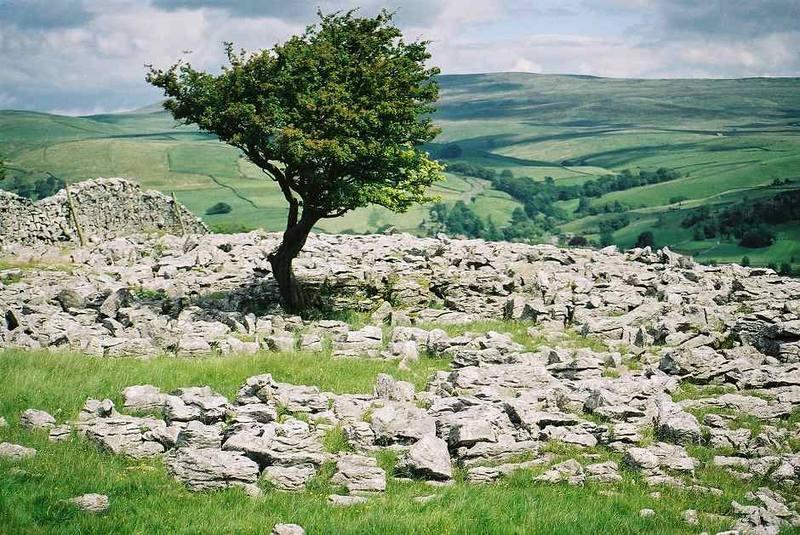 Limestone Pavement im Ribblesdale