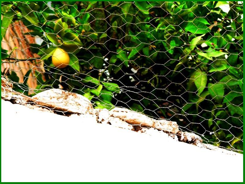 limon --