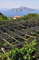 Limonenplantage auf der sorrentinischen Halbinsel mit Capri
