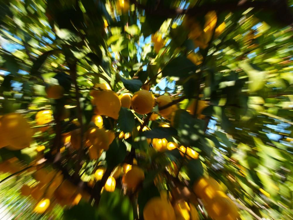 limoni pazzi