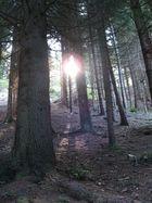L'incantevole luce del bosco