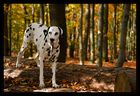 Linda im Herbstwald