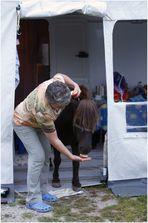 Lindau lebt oder: wie bekommt man ein Pony aus dem Vorzelt....