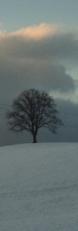 Linde im Schnee