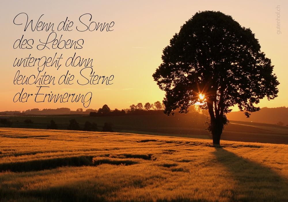 Linde im Sonnenuntergang Foto & Bild   trauerkarten