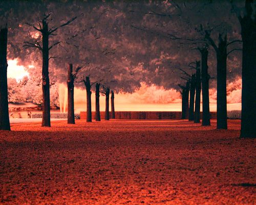 Line of Trees in red