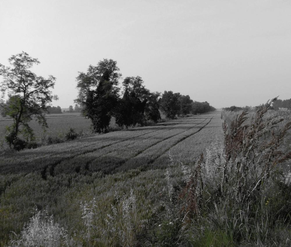 Linee nel grano 1