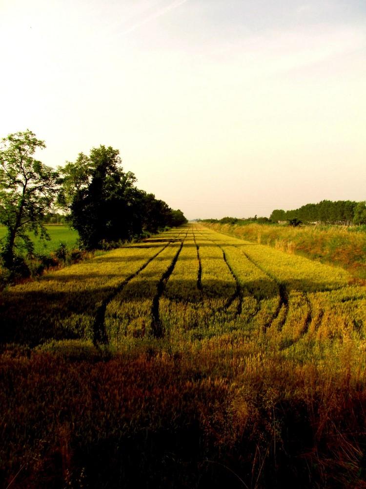 Linee nel grano 3