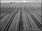 Linien auf dem Felde