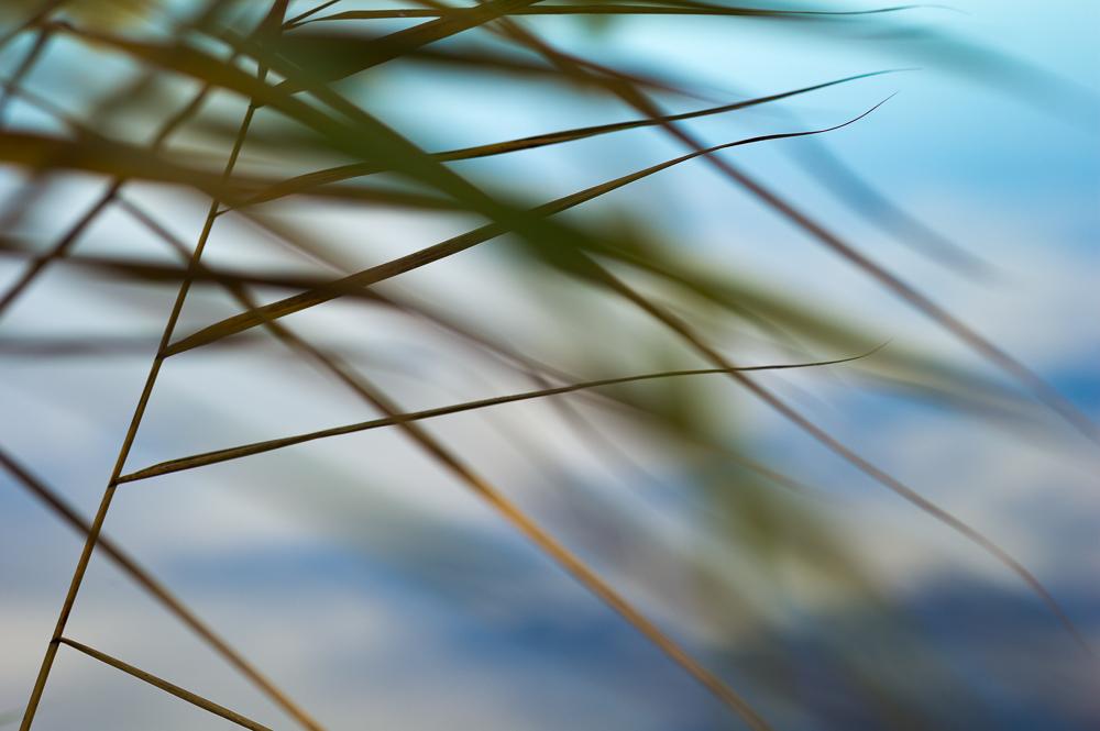 Linien im Wind