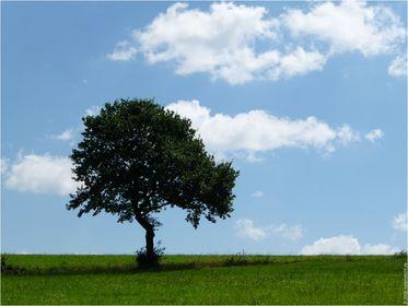 022 - Baum-Emotionen