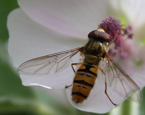 L'insecte et la fleur