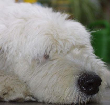 Linus - ein Hund zum liebhaben!