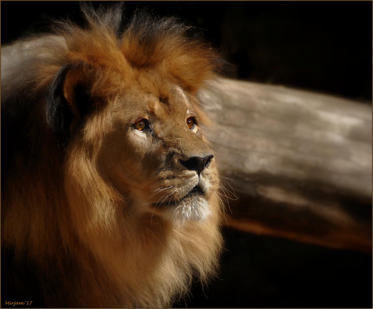 Lion heart ..