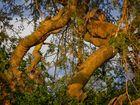 Lion Tree