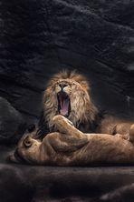 LION V2