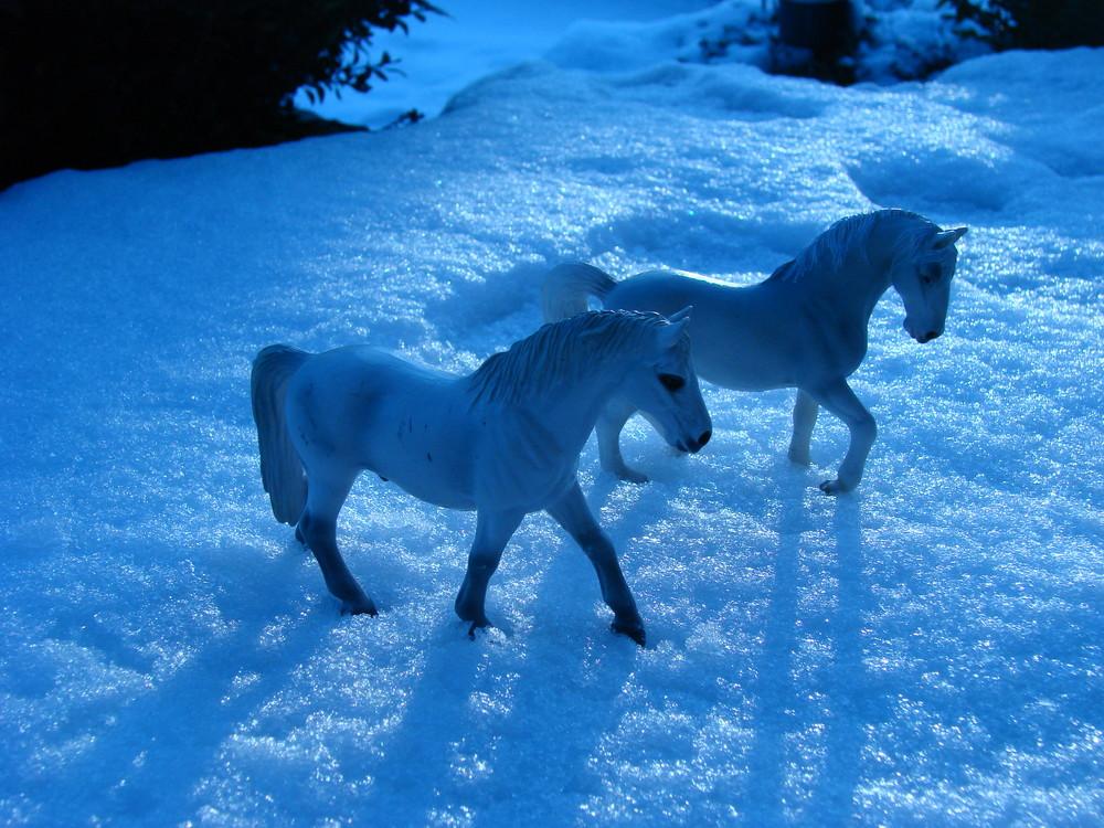 Lippizaner & Andalusier im Schnee