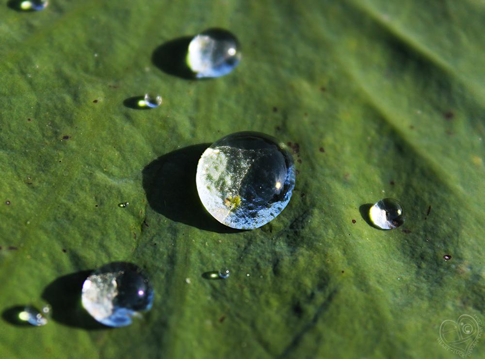 Liquid Solar System