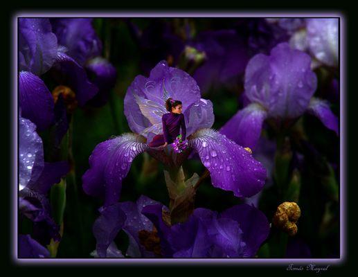 Lirios y Violetas