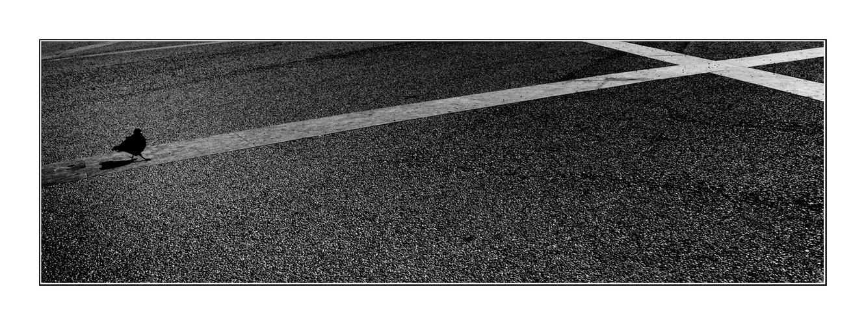lisboa lines-3-