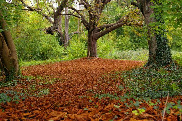 lit de feuilles mortes