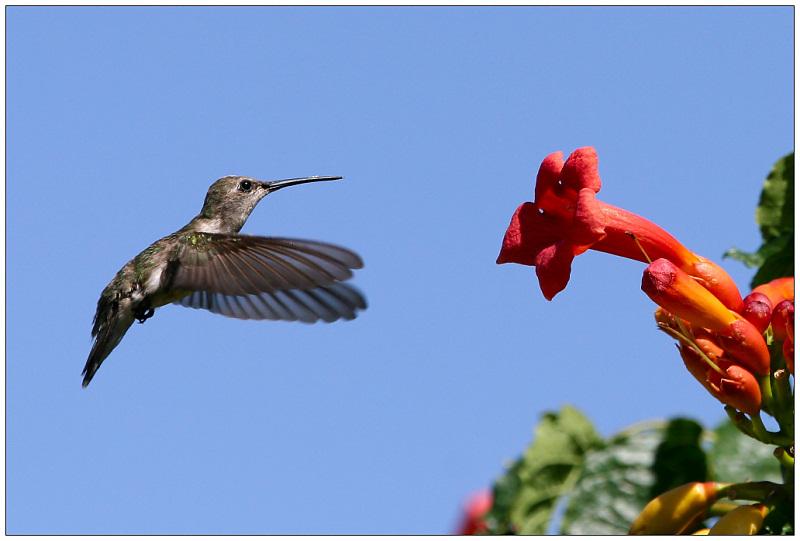 """Little Bird in Birdies Garden"""