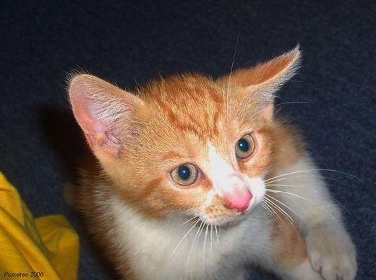Little boycat :-)