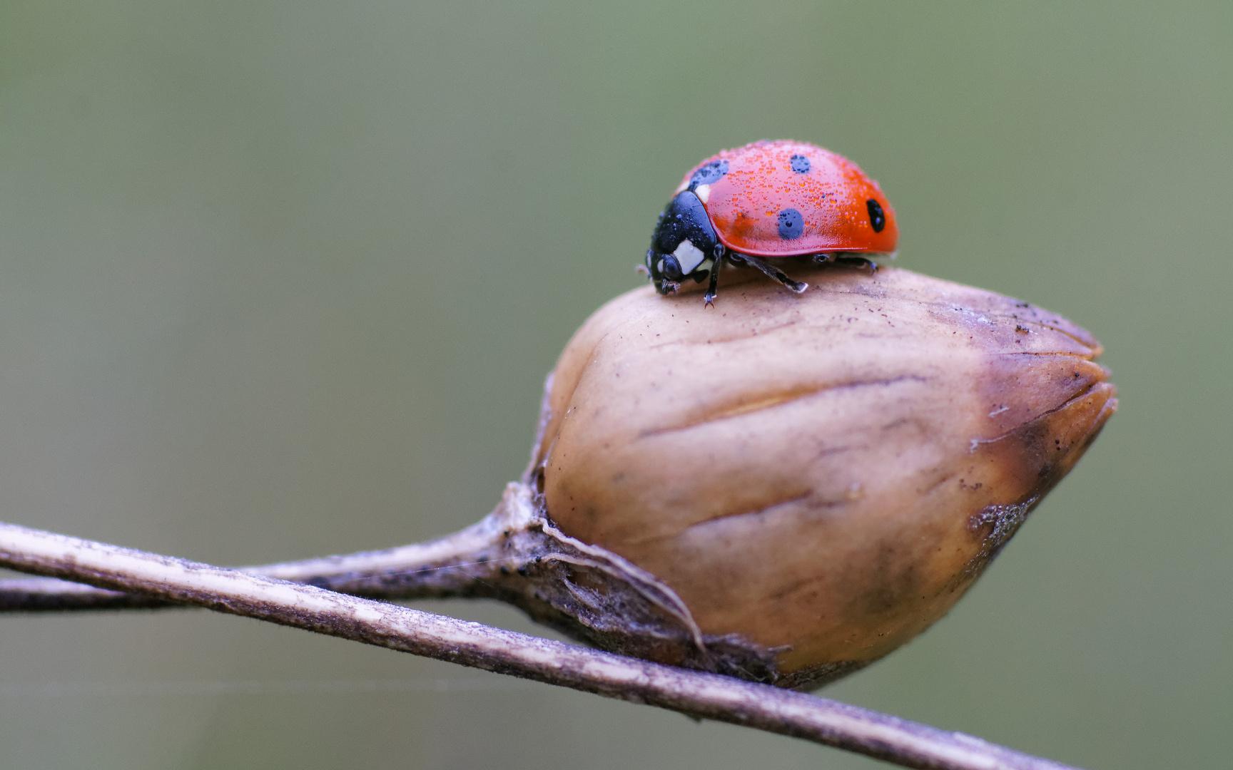 Little Bug 2