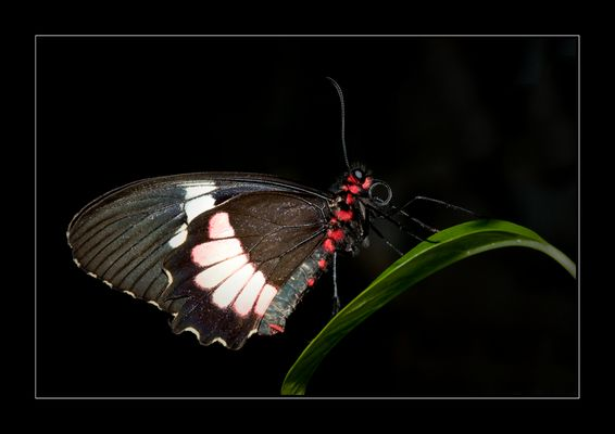Little butterfly.........