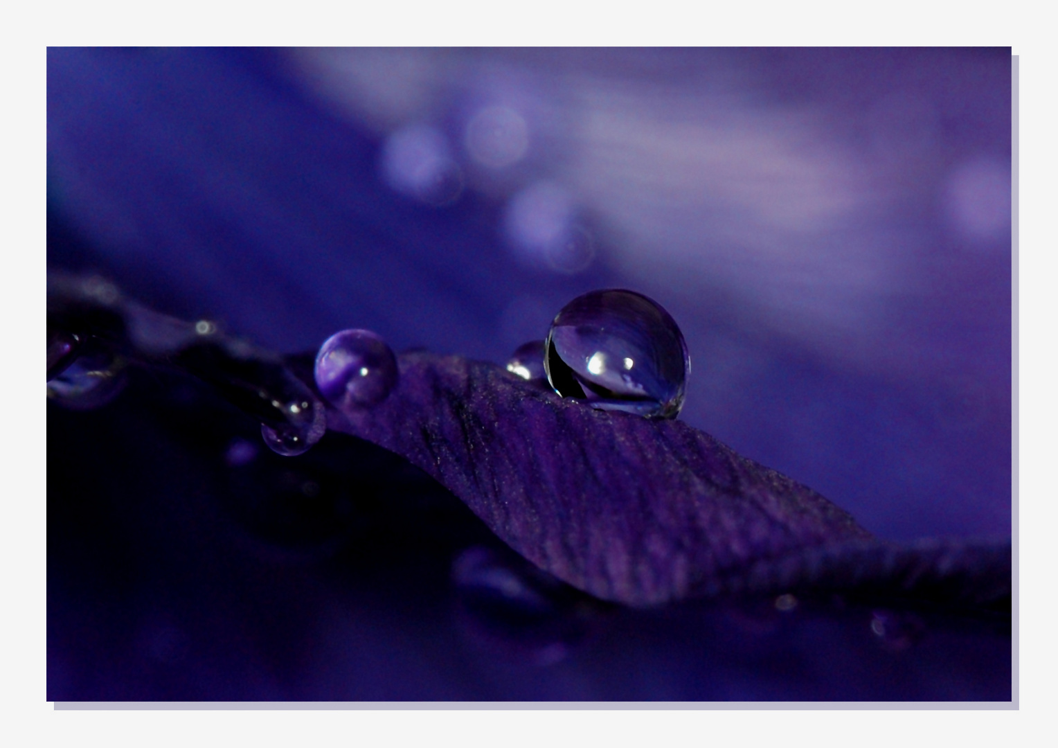 Little Drops *