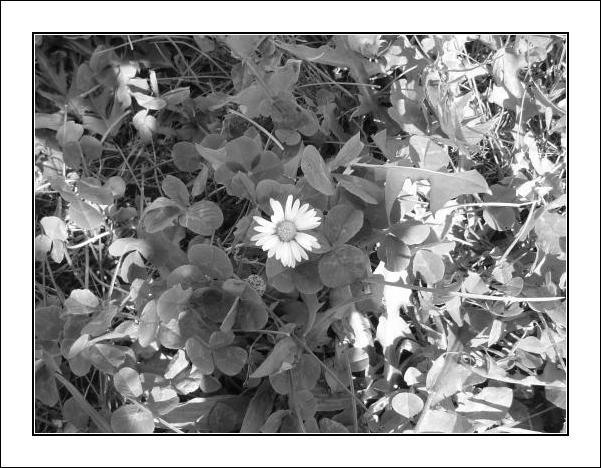 Little Flower...