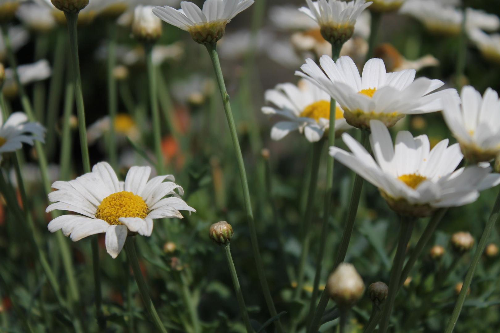 Little flowers in the garden