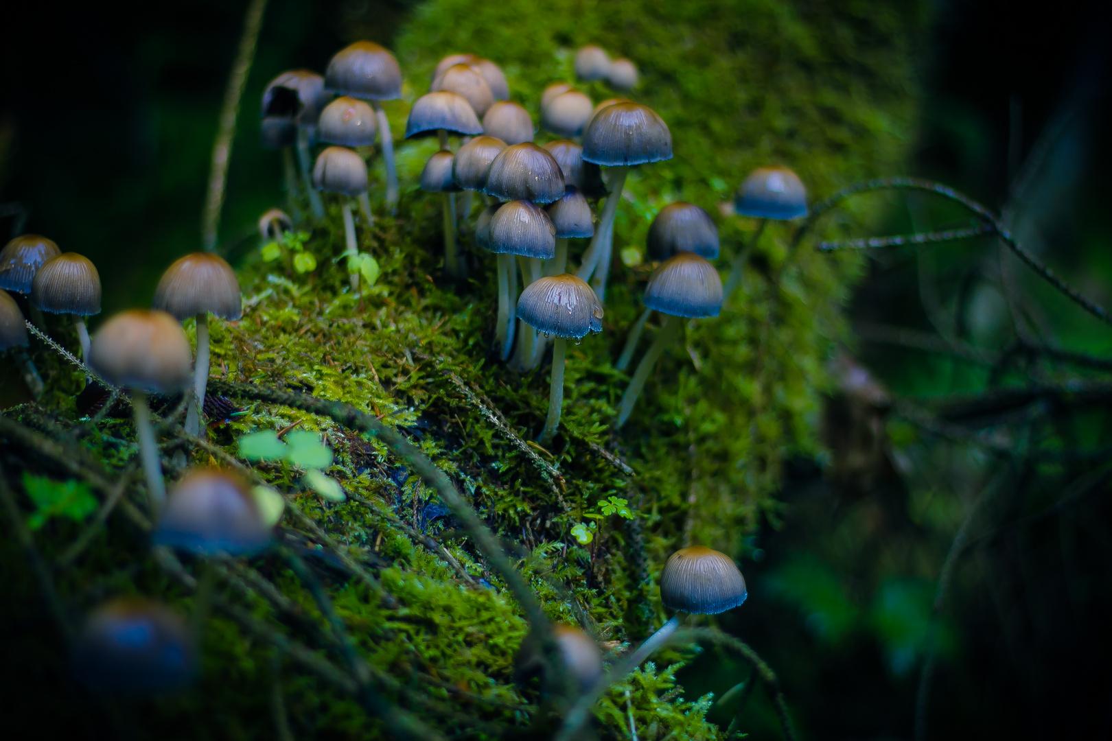 little fungis