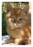 Little Garfield