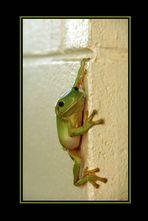Little Green Climber (Reload)