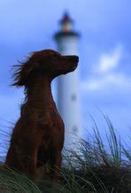 *Little Lighthouse Keeper*