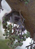 Little Monkey..
