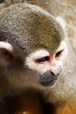 Little Monkeys Portrait