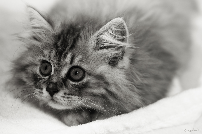 little Olivia 4