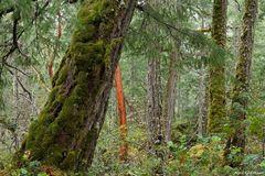 Little Qualicum Provincial Park 2