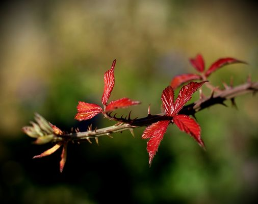 Little red leaves