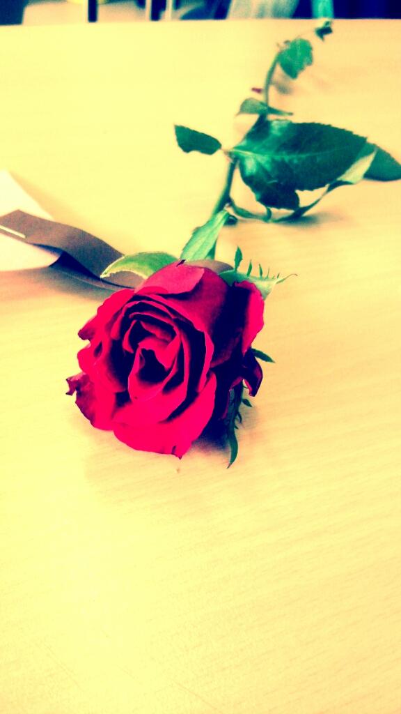 Little Rose...