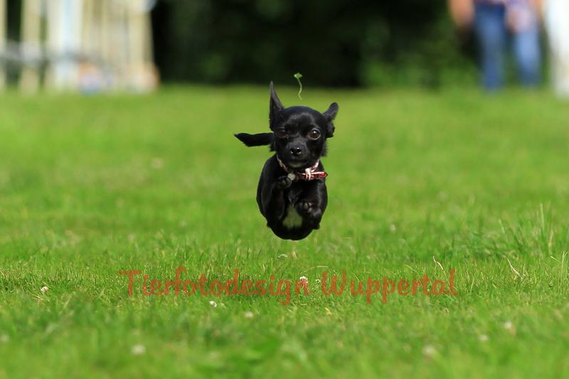 Little Runner