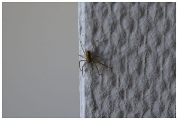 Little Spider on the Wall