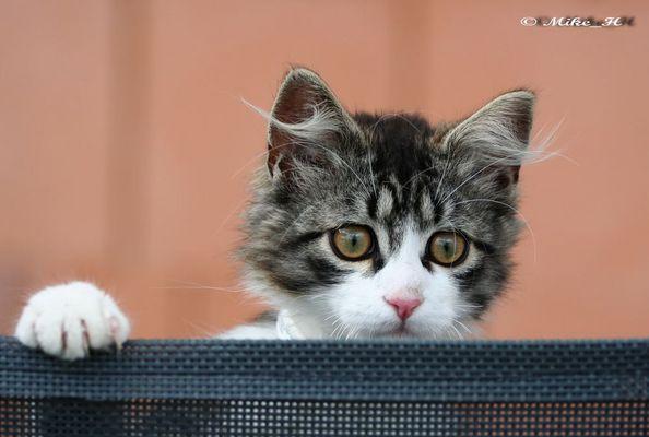little Tiger :)